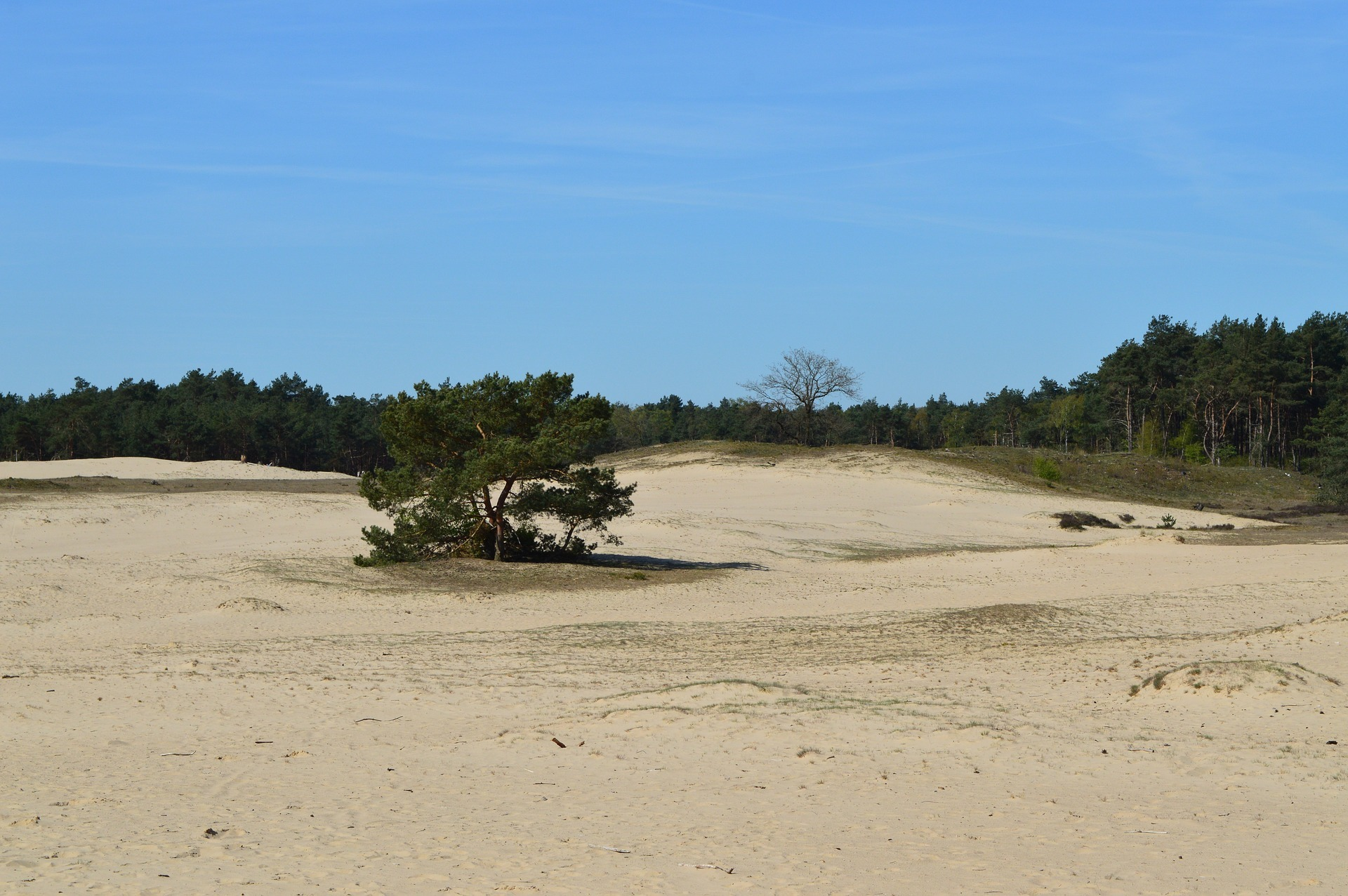 Zandvlakte op de Veluwe, foto Pixabay