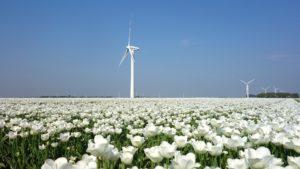 Tulpen en windmolens. Foto Pixabay