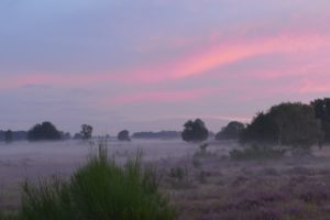 Heideveld met mystieke sfeer. Foto Pixabay.