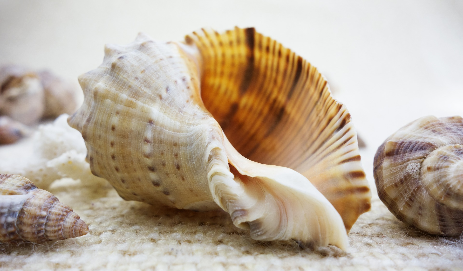 Schelpen. Foto Pixabay