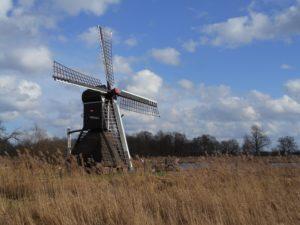 Riet en molen in de Weerribben. Foto Pixabay
