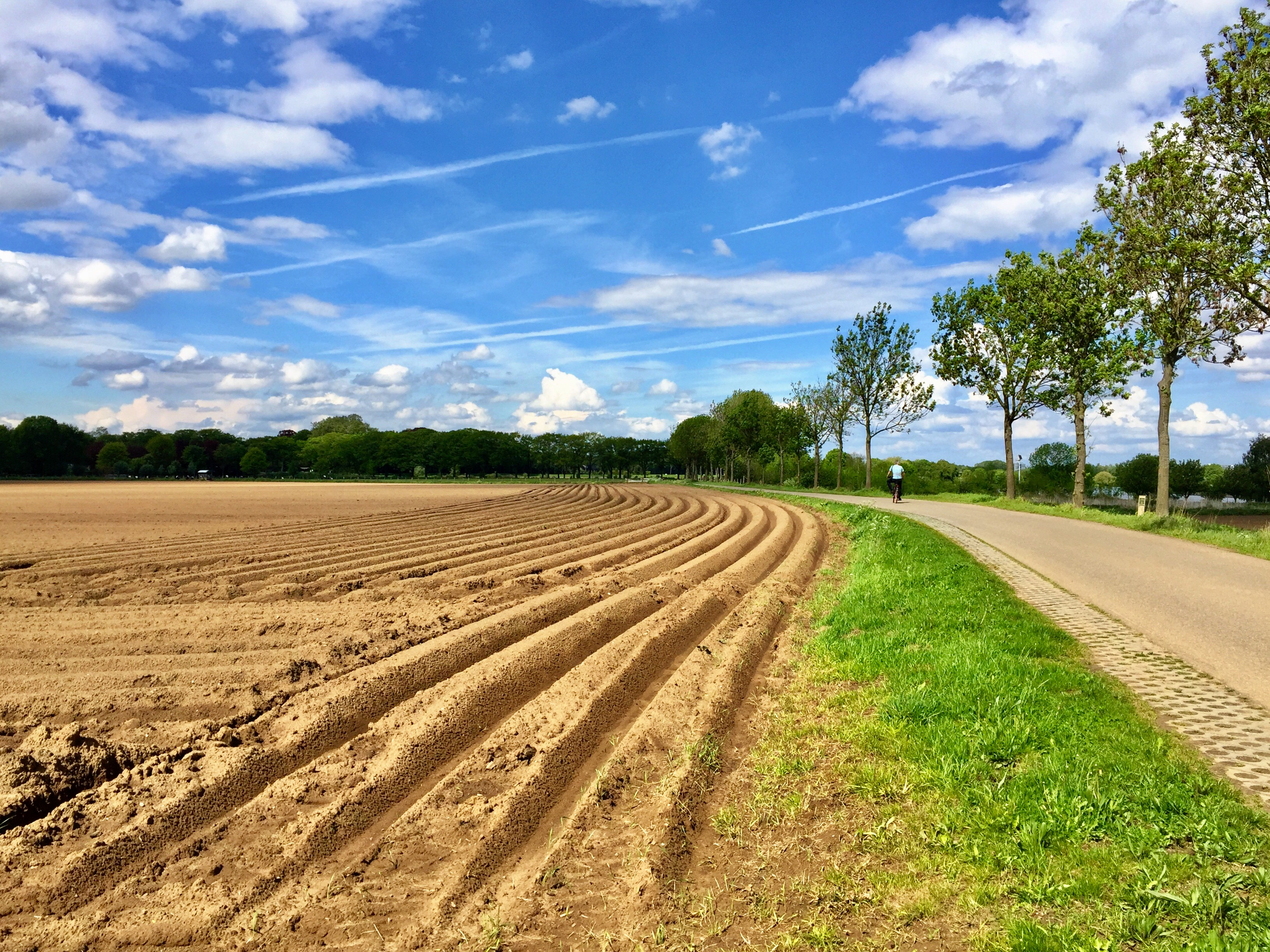 Aspergevelden in Noord-Limburg. Foto Sybylle Kroon