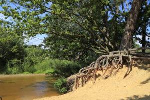 Mangrove in Twente. Foto Sybylle Kroon